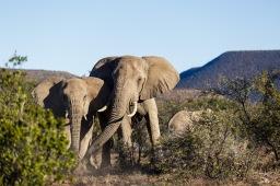 Elephants: A Regenerator